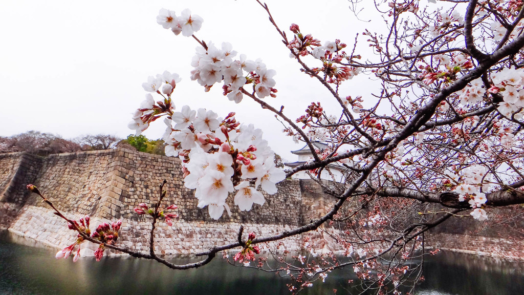 Begin of Sakura season.