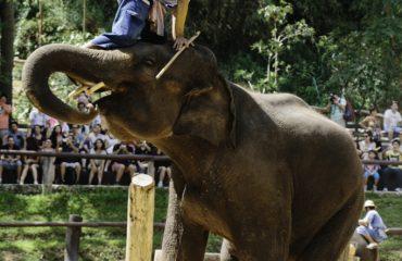 Mae Sa Elephant Camp, Chiang Mai, Thailand