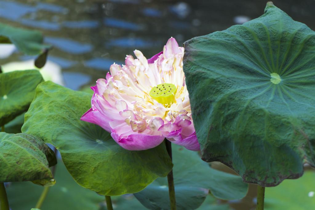 Royal Flora Ratchaphruek | Chiang Mai