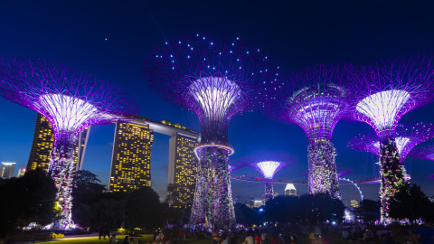 Supertrees Grove Gardens by the Bay